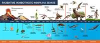 """Стенд """"Развитие животного мира на земле"""", 160х70 см"""